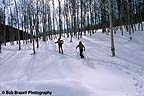 Skiers touring through aspens