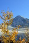 The last of the fall leaves frame new snowfall on Mt. Crested Butte.